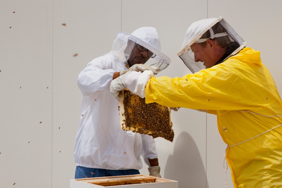 A student and professor wear protective beekeeping gear as they tend to a hive.