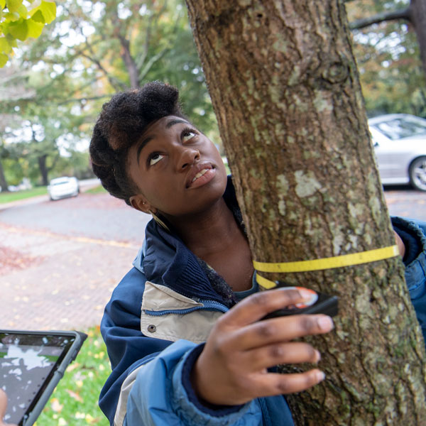 A student measures the diameter of a tree trunk.
